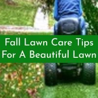 Fall Lawn Care Tips For A Beautiful Lawn