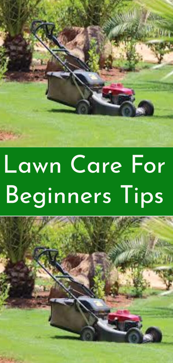 Lawn Care For Beginners Tips