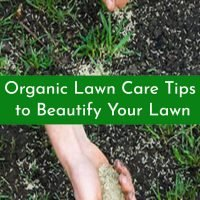 Organic Lawn Care Tips to Beautify Your Lawn