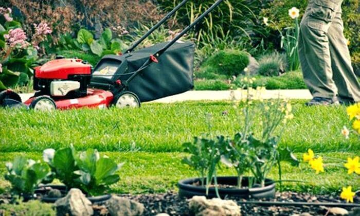 green lawn care tips