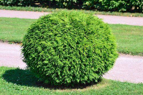 Front Yard Evergreen Landscape Design Ideas