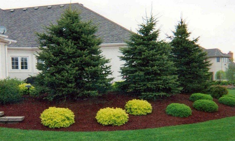 evergreen landscaping