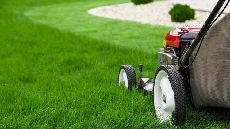 lawn service, lawn services