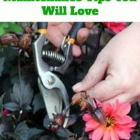 8 Amazing Garden Maintenance Tips You Will Love