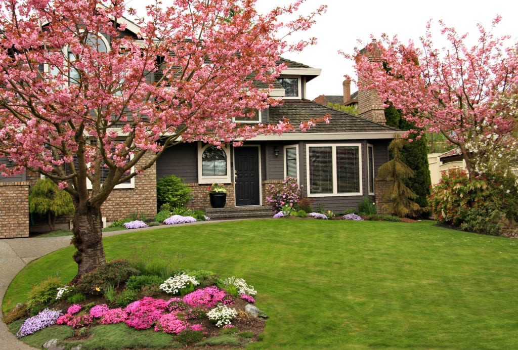 Plant an ornamental colored tree